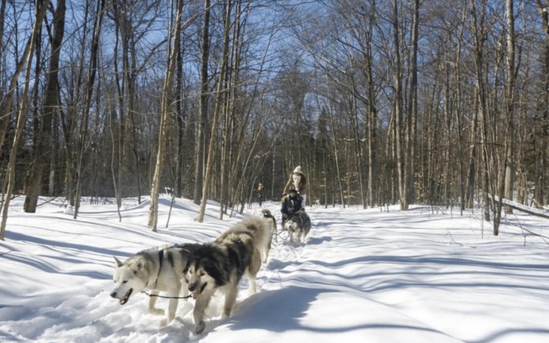 Dog Sledding Adventure from Toronto